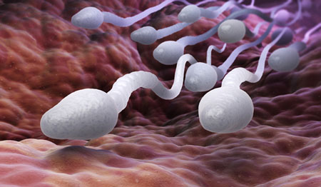 cuộc đua của tinh trùng