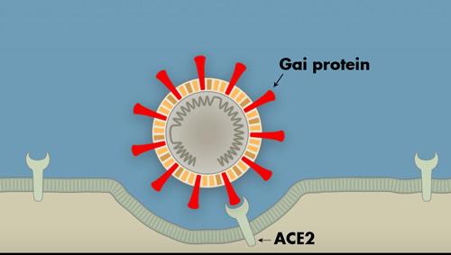 tại sao virus SARS-CoV-2 lại dễ lây lan đến vậy