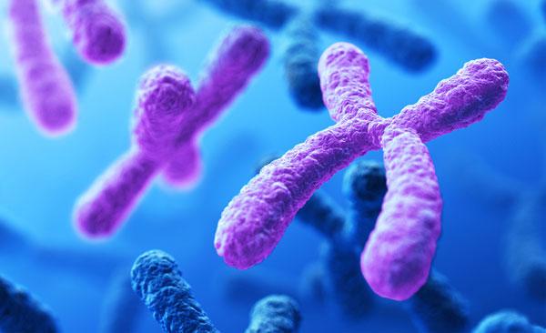 Bộ nhiễm sắc thể của phụ nữ khiến họ ít bị ảnh hưởng bởi COVID-19 hơn