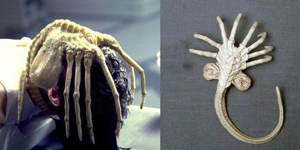 Tạo hình đáng sợ của ấu trùng quái vật Xenomorph trong phim Alien