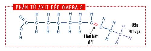 phân tử axit béo omega 3