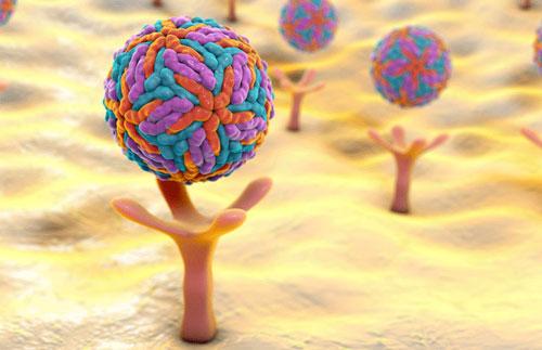 các thụ thể trên bề mặt tế bào